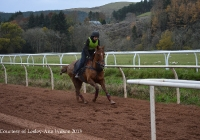 At Home on the Gallops Nov 2013